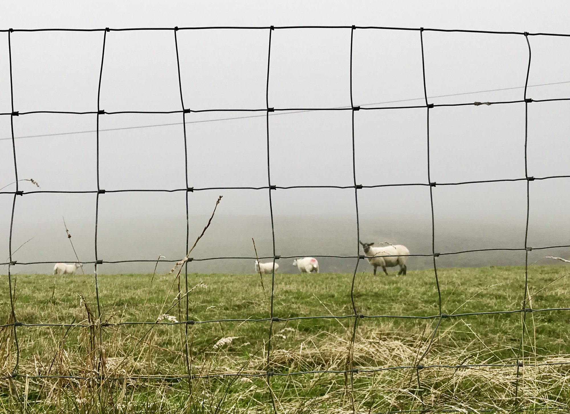 Perfect Sheep Wire Fencing Gift - Electrical Diagram Ideas ...